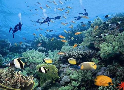 手抄报,绘画,摄影作品,创意作品,海洋绘本,衍纸作品……各种海洋知识